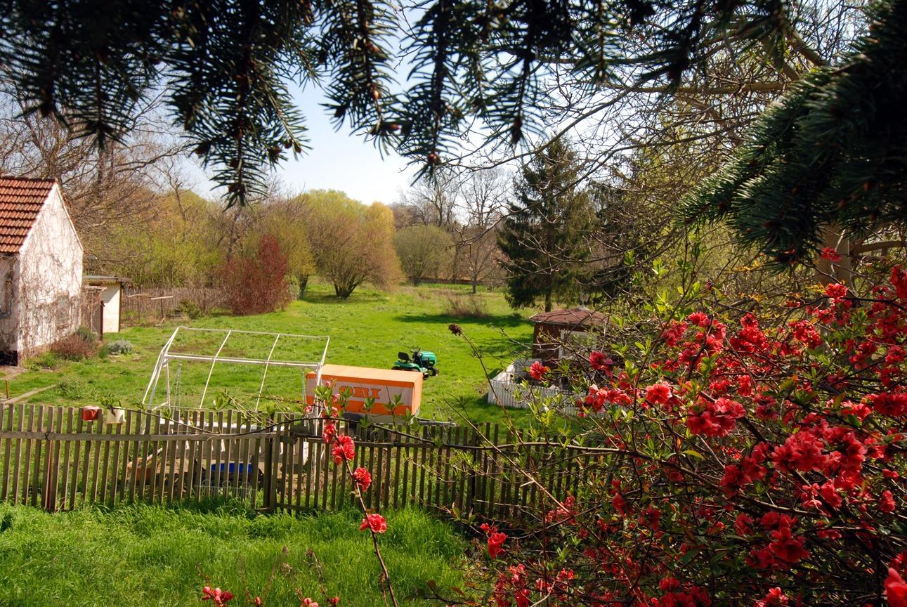 Einfamilienhaus Freist - Blick in den Garten