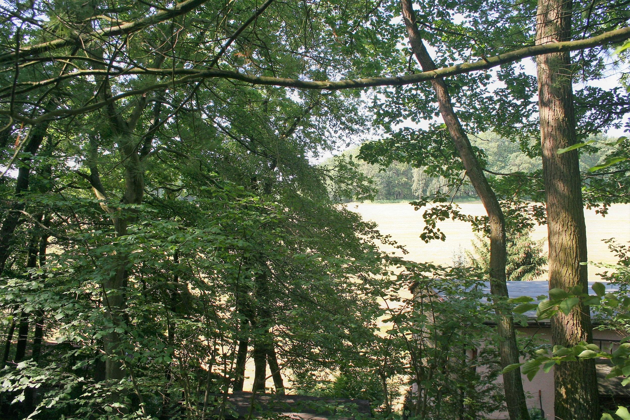 Wochenendgrundstück in Gorenzen - Terrassenblick