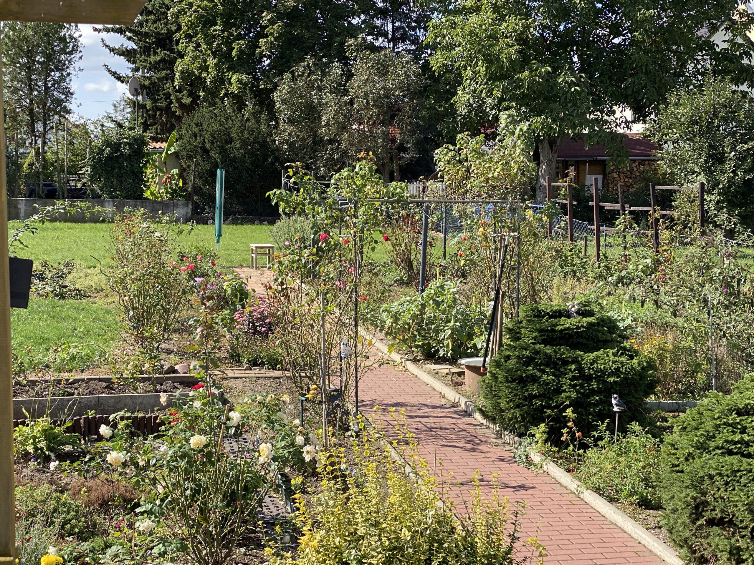 Einfamilienhaus Ellernstraße - Blick in den Garten