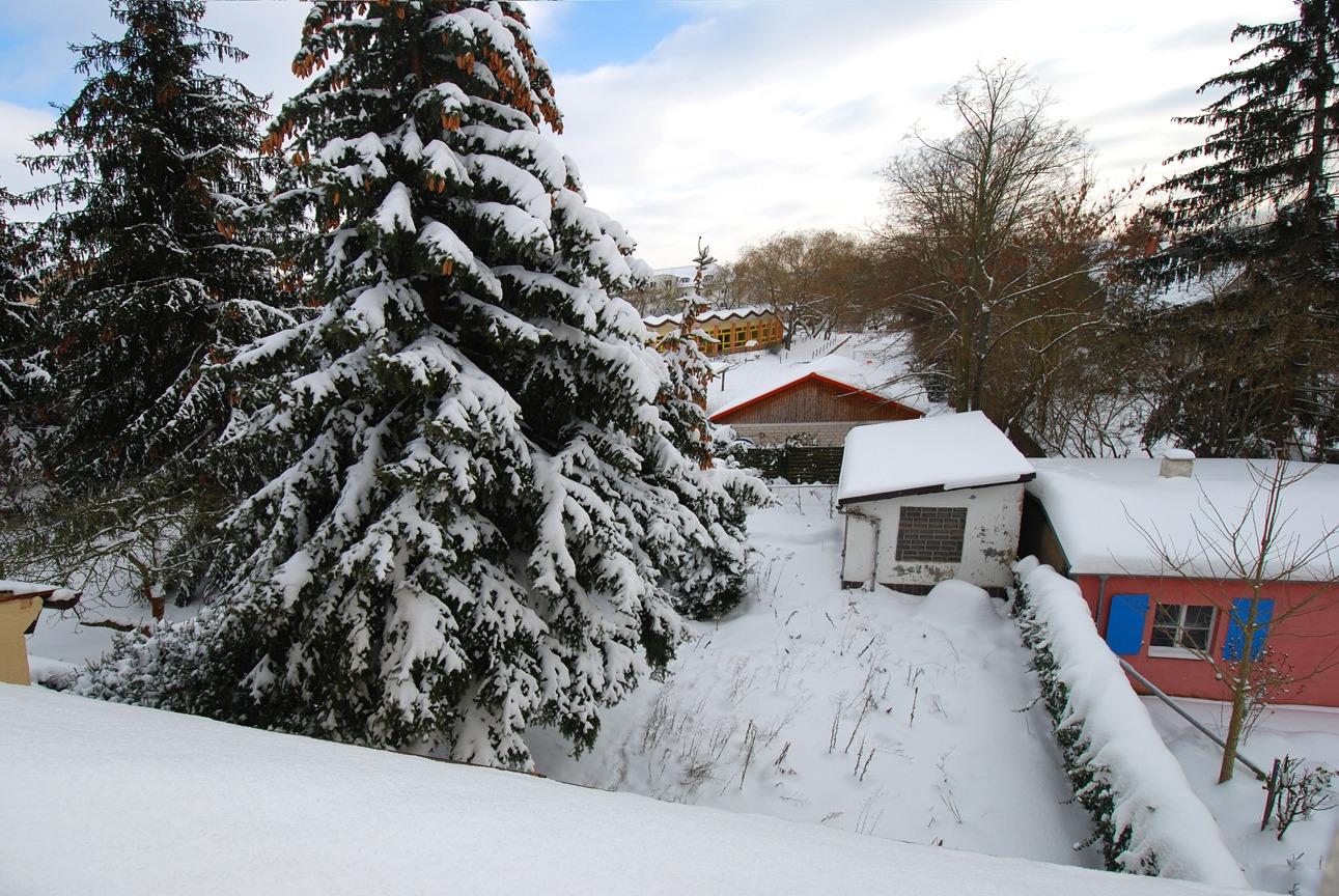 Einfamilienhaus Trotha - Blick in den Garten