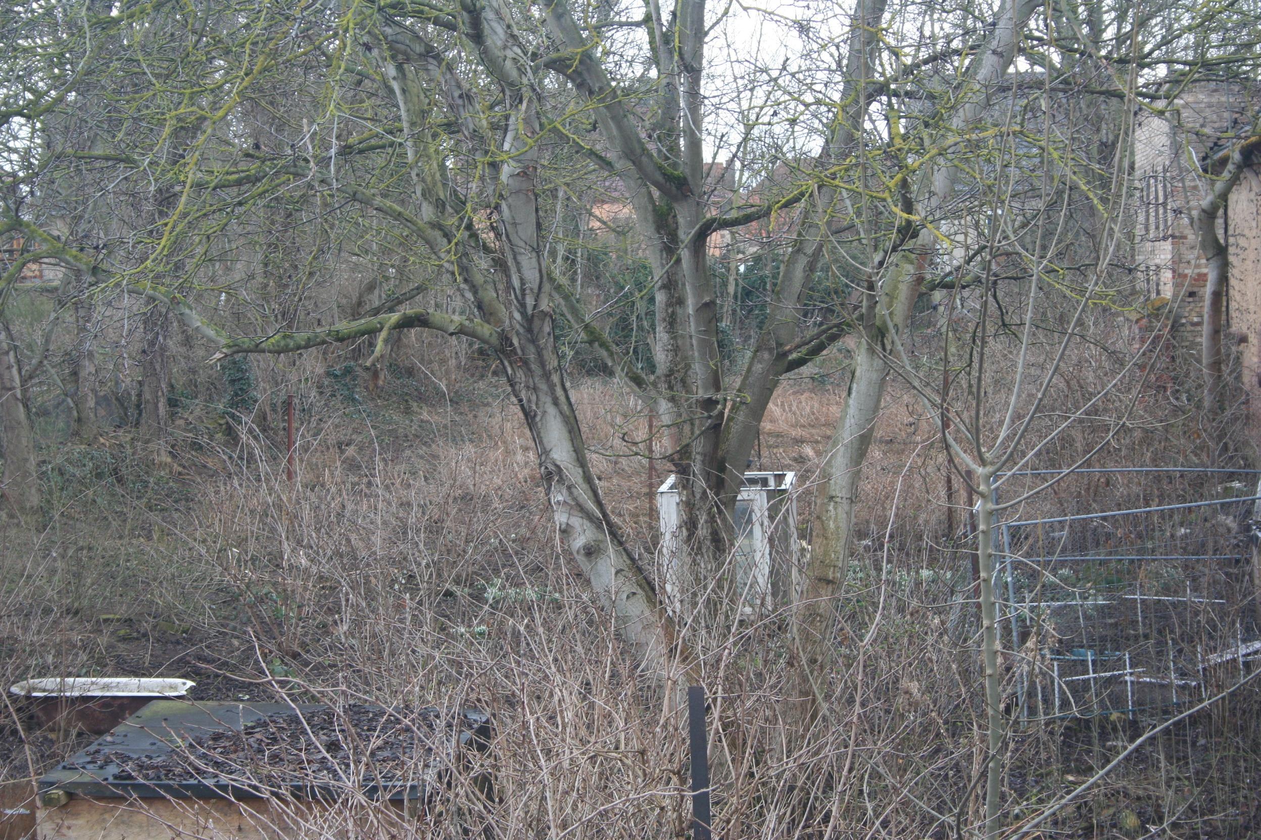 Einfamilienhaus Nauendorf - Blick in den Garten