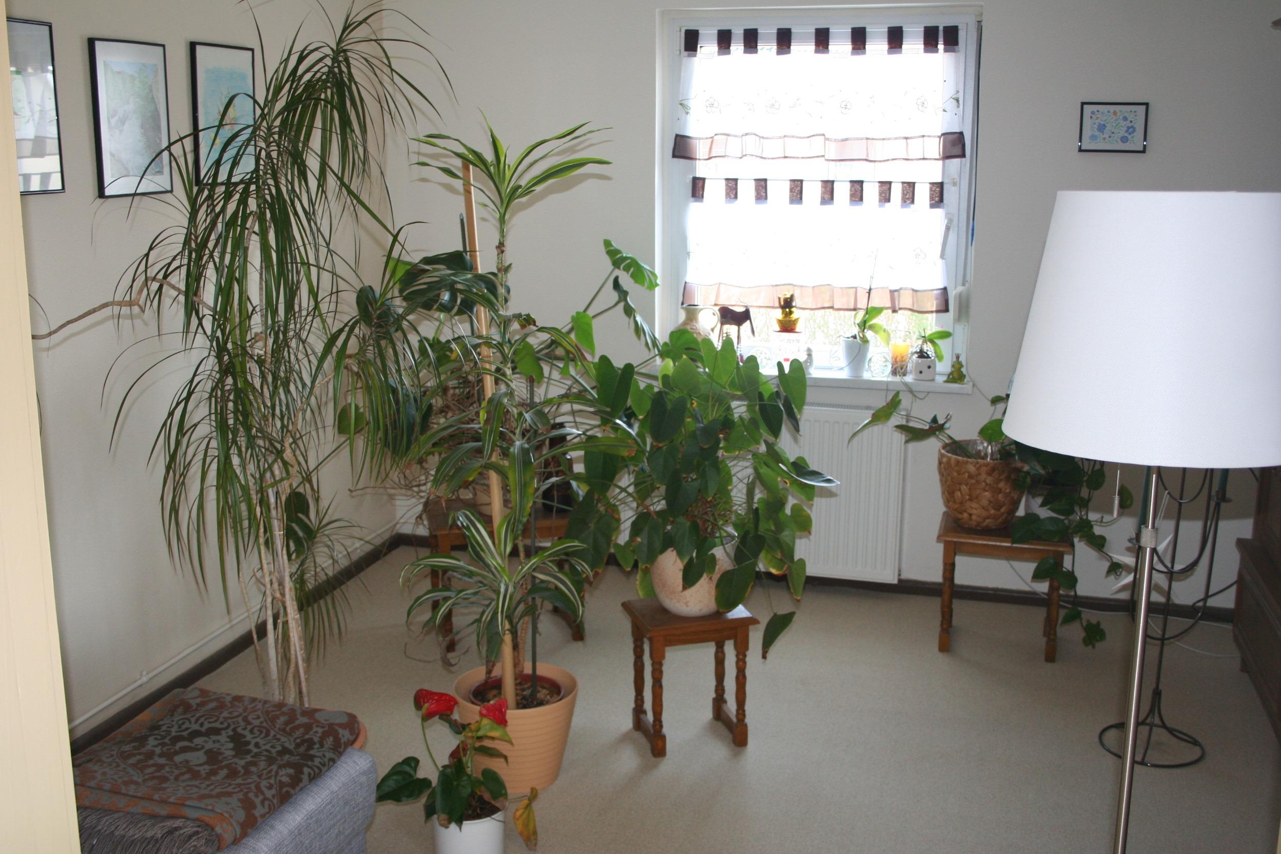Einfamilienhaus Dautzsch Teil des Wohnzimmers