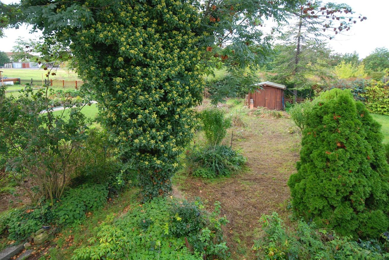Ein- bis Zweifamilienhaus Frankleben - Blick in den Garten
